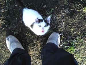 畑の捨て猫