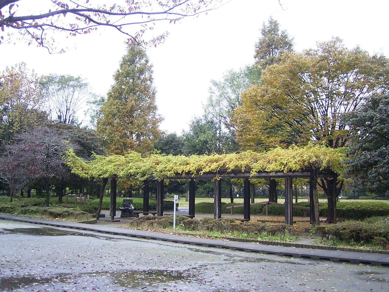 自然公園紅葉2