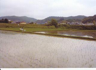 2012田植え