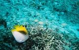 海の中の魚たち