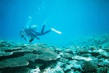 珊瑚とダイバー