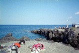 伊豆大島-秋の浜