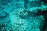 安室漁礁2