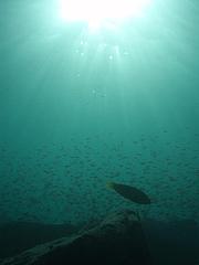 太陽と、小さい魚たちと、大きいの