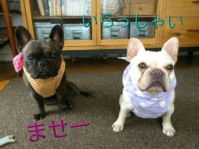 fc2blog_2012070520100028e.jpg