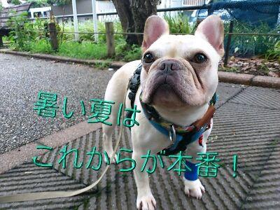 fc2blog_20120721194910b4c.jpg