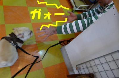 201132910.jpg