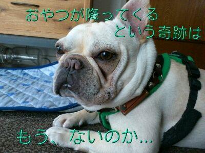 fc2blog_2012052607164531b.jpg