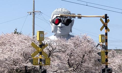 グラサン大仏と桜