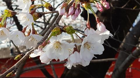 春になれば、かれんな花々がひとひらひとひら開く