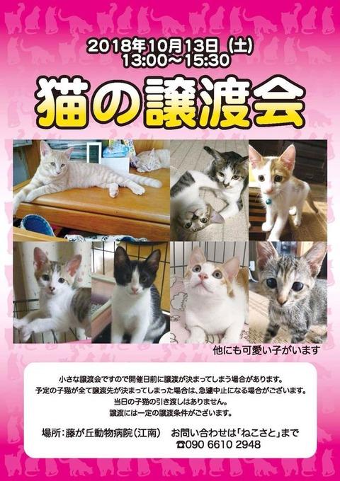「猫の譲渡会」10/13(土)藤ヶ丘動物クリニック