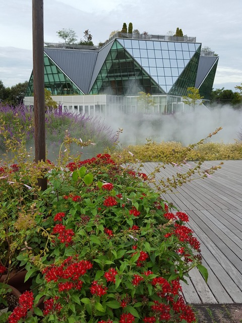 赤い花々が幻想的な雰囲気をかもし出していた