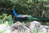 シャボテン公園8