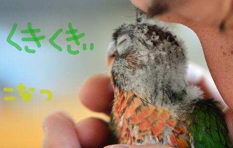 konatsu_kuki2