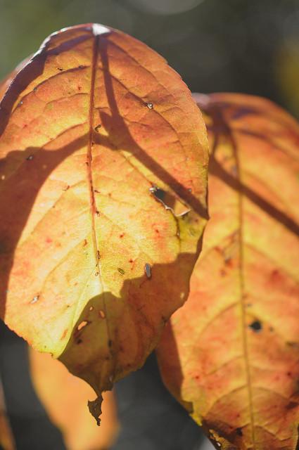 自然教育園の紅葉