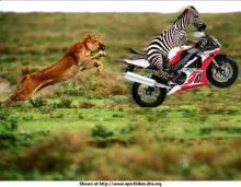 動物面白画像4