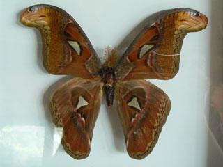 bali-butterfly-park7