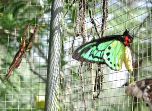 bali-butterfly-park5
