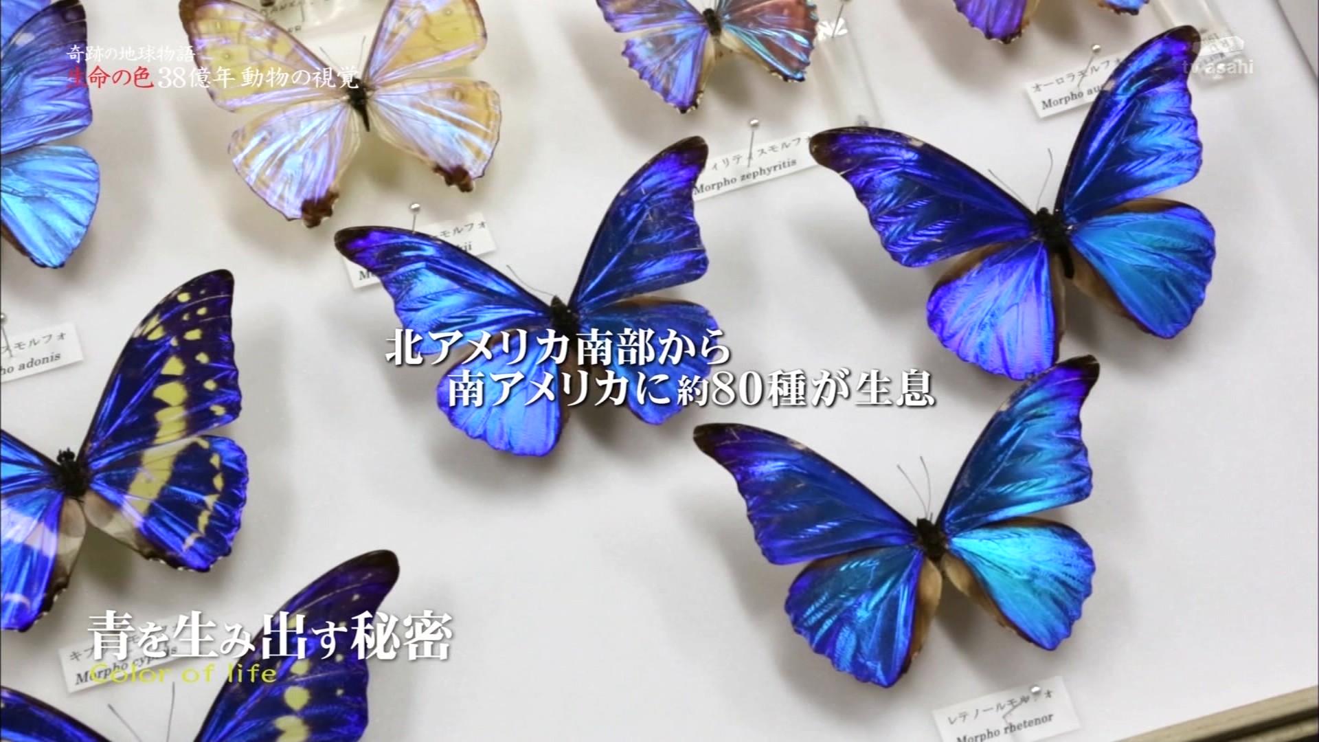 20130730-191142-943 内容生物の色彩を取り上げる。東大総合博物館の遠藤秀紀教授
