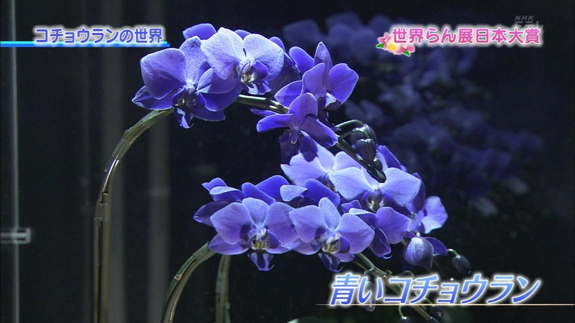 趣味の園芸 世界らん展日本大賞2...