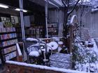 雪の日の決断