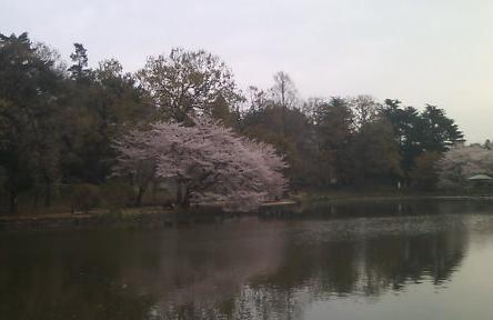 20100411大宮公園