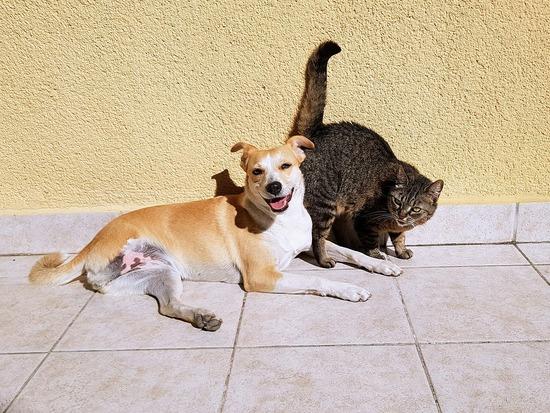 pets-2283305_960_720
