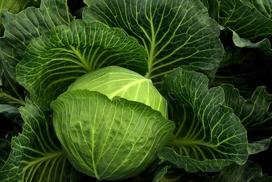 cabbage-3722498_960_720