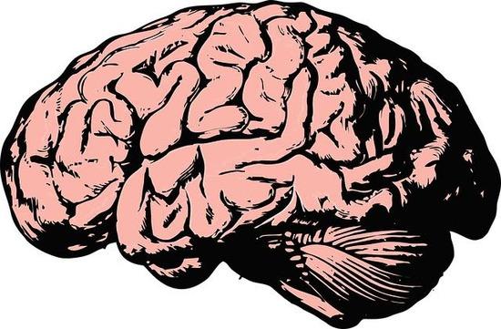 th_brain-2845862_640