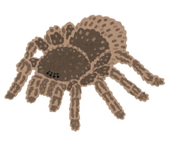bug_kumo_tarantula_のコピー