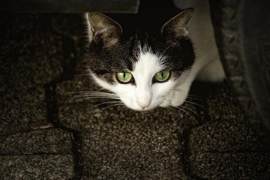 cat-207583_640