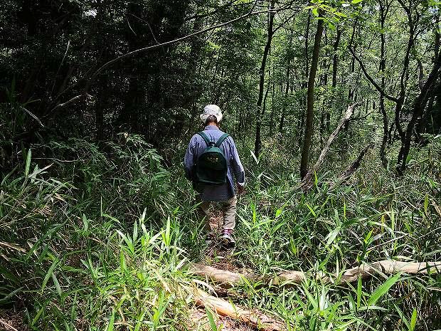 日田市民なら一度は登りたい山 五条殿(ごじゅうどん)  (24)