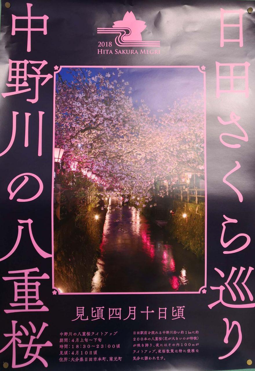 日田さくら巡り 中野川の八重桜