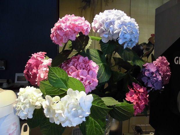 たくさんの紫陽花 日田温泉 亀山亭ホテル