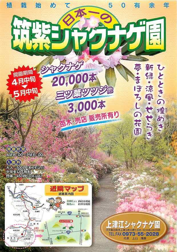 植栽始めて50有余念 日本一の筑紫シャクナゲ園