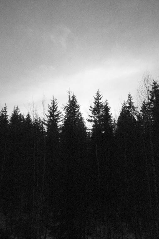 Timber_001