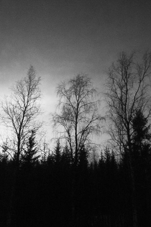 Timber_002