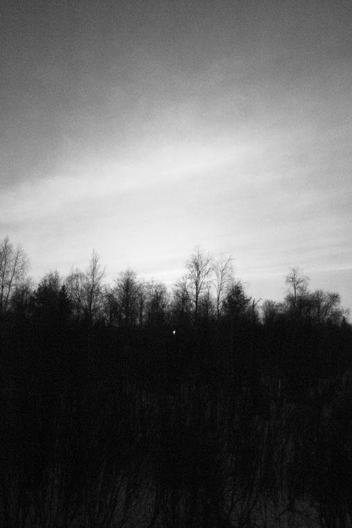 Timber_004