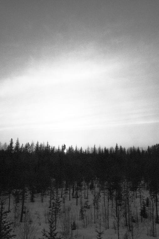 Timber_003