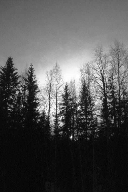 Timber_006
