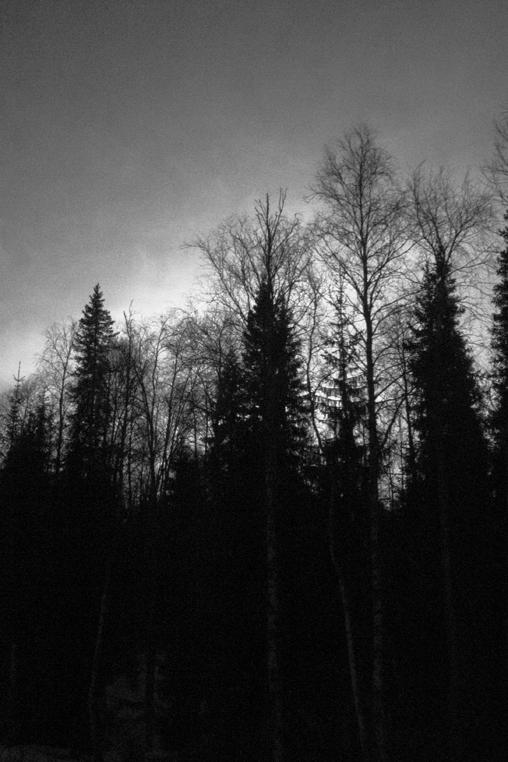 Timber_005