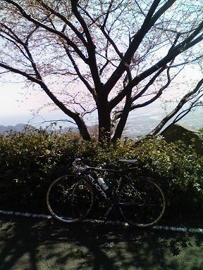 笛吹き段公園の桜は3分咲きと ... : 自転車屋さん ベル : 自転車屋
