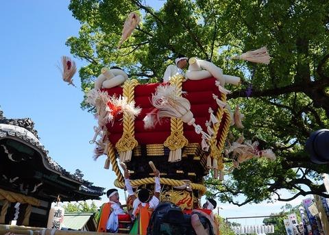 上野①秋が舞う(百舌鳥八幡)