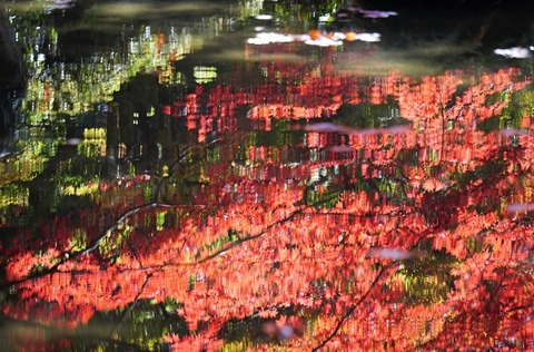上野⑤水面の紅葉(金剛輪寺)