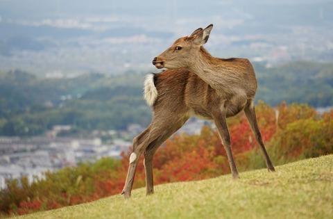 上野③カメラ目線(若草山)