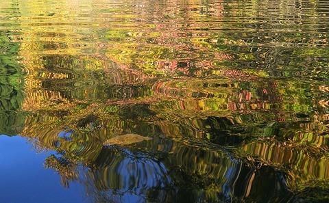 紅葉の水面