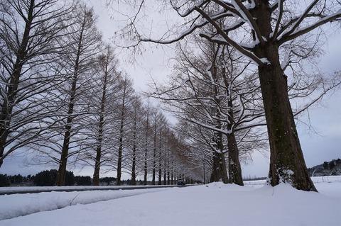 上野④冬の散歩道(マキノ)