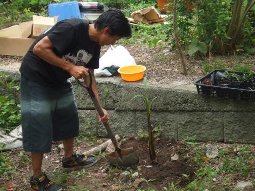20070720027バナナの木