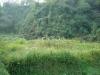 My farm 2009.10.31