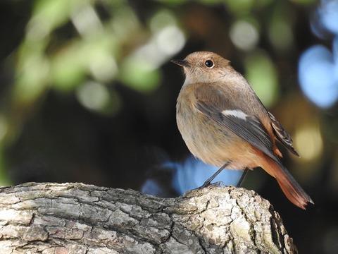 1702bird01